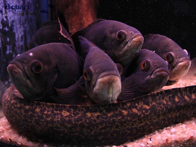 Aquario-de-Bonito-Bonitour-Passeios-em-Bonito-MS-111425_2103.jpg
