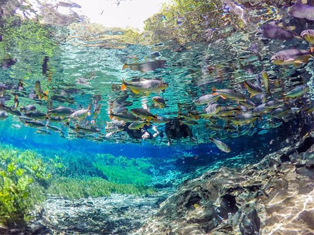 Aquário Natural - Flutuação - bonito