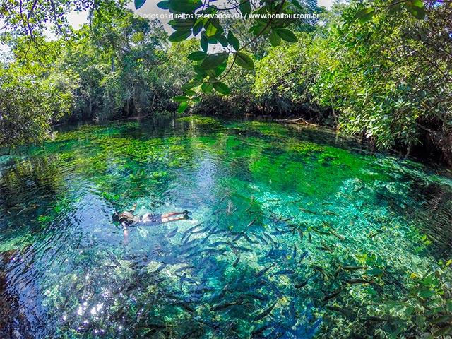Aquario-natural-flutuacao-Bonitour-Passeios-em-Bonito-MS-956_2333.jpg