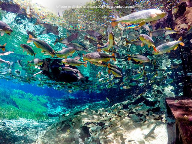 Aquario-natural-flutuacao-Bonitour-Passeios-em-Bonito-MS-956_2334.jpg - Passeios em Bonito MS