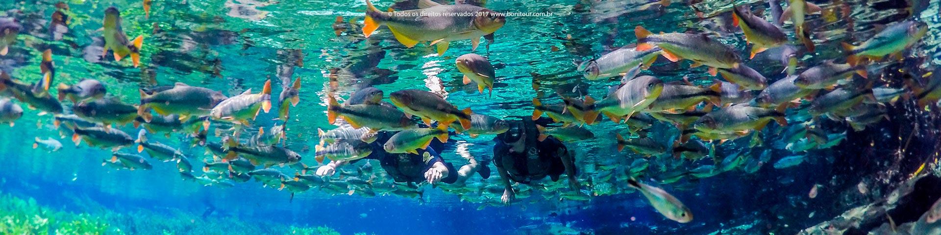 Aquario-natural-flutuacao-Bonitour-Passeios-em-Bonito-MS-956_2330.jpg