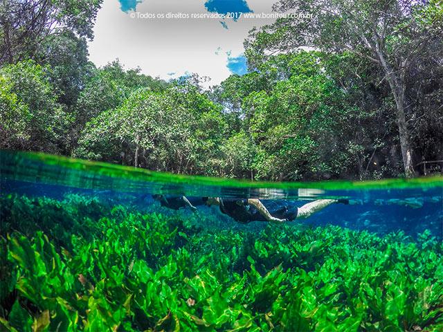 Aquario-natural-flutuacao-Bonitour-Passeios-em-Bonito-MS-956_2341.jpg - Passeios em Bonito MS