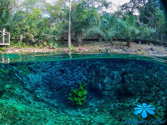 Nascente-Azul-Flutuacao-Bonitour-Passeios-em-Bonito-MS-1106_66444.jpg