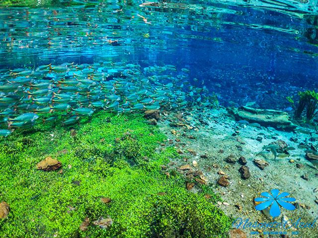 Nascente-Azul-Flutuacao-Bonitour-Passeios-em-Bonito-MS-1106_66446.jpg