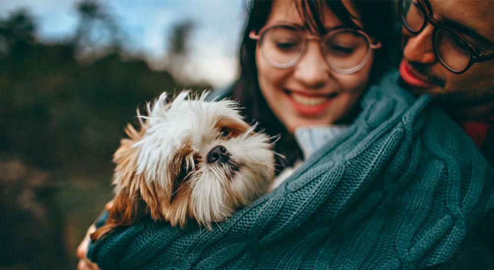 Viagem com pets: dicas para viajar com o seu melhor amigo de carro ou avião - fernando-de-noronha