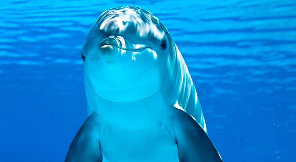 Os golfinhos de Fernando de Noronha - bonito